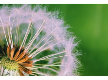 Los 6 grupos de alérgenos más frecuentes